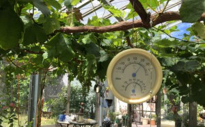 20160615_thermometer