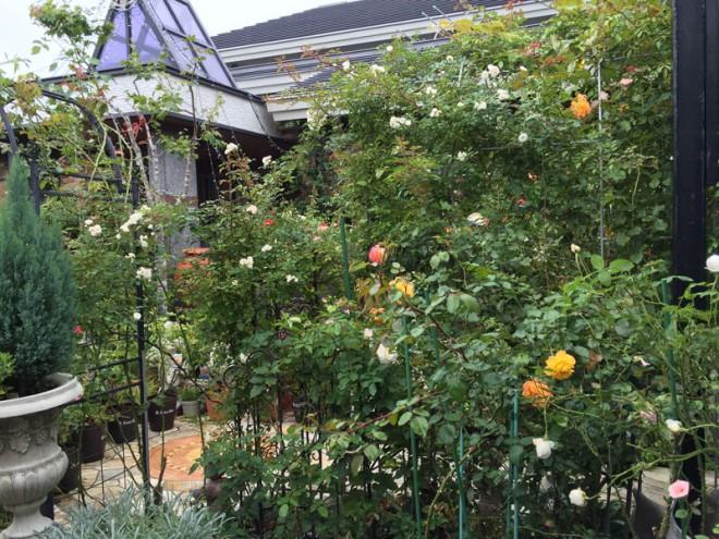 20160917_garden2