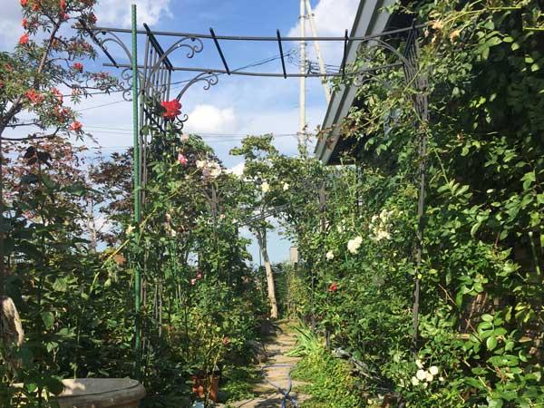 3543_garden6