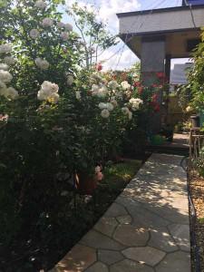 3544_garden5